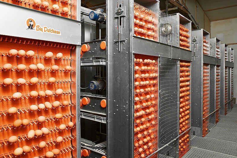 Egg Collection Systems